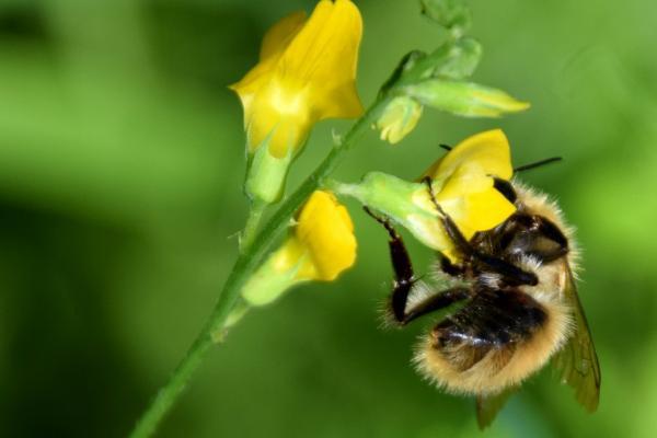 MHS gele bloem met bijtje