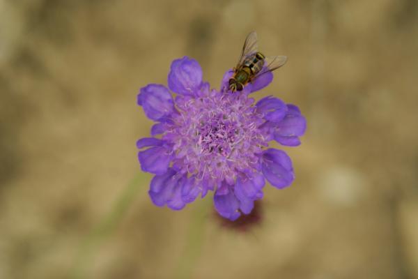 MHS paars bloemhart
