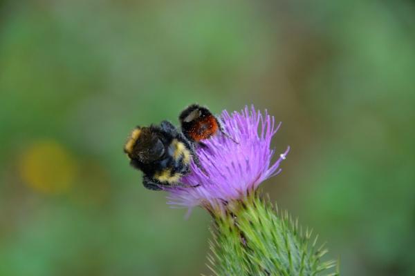 MHS lila bloem met insectje
