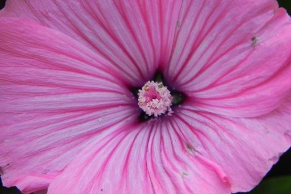 zomerbeeld in lila
