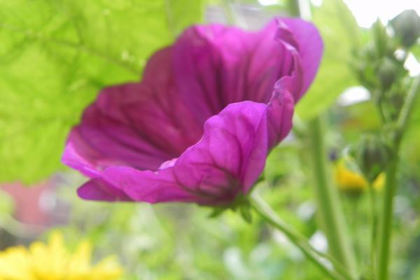 zomerbeeld in paars